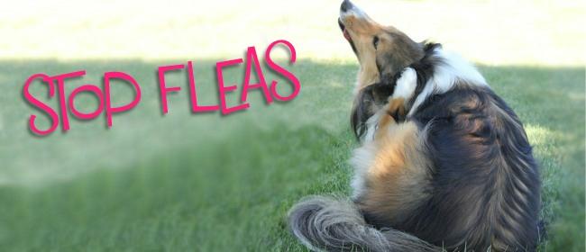 stop fleas covers