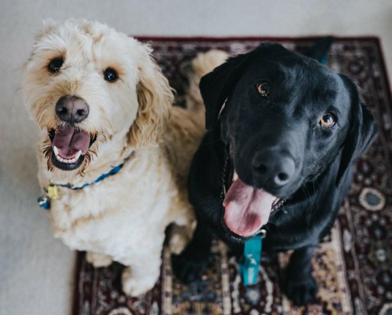 senior dog friends