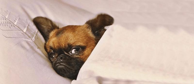 dog friendly hotels boston
