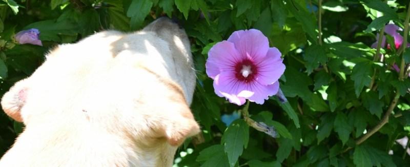 spring gardens dog