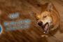 Hypoallergenic Dog cover