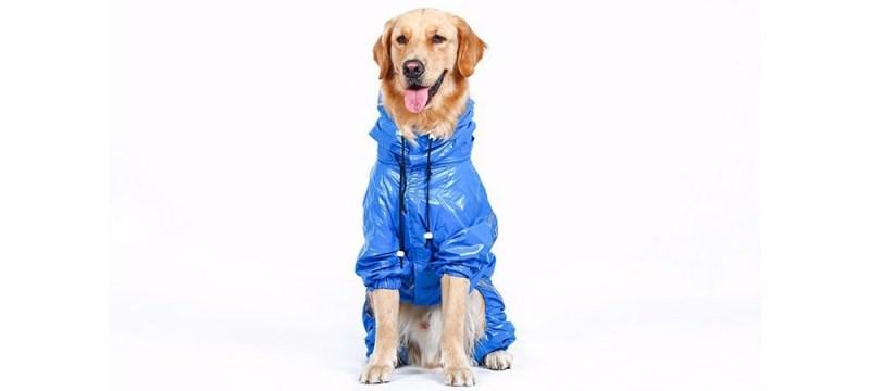 shelter dog raincoat