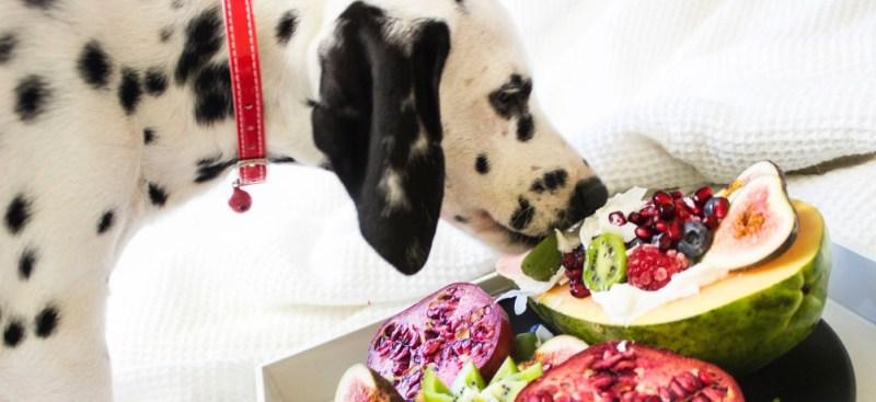 happier pets eats
