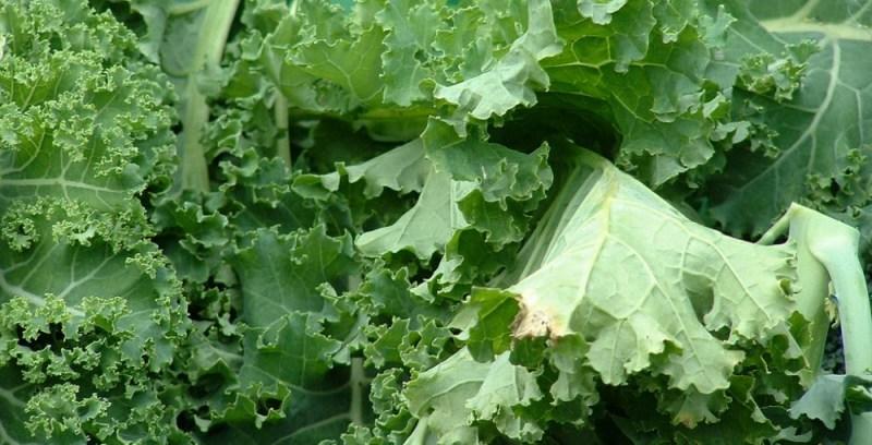 kale vegetables