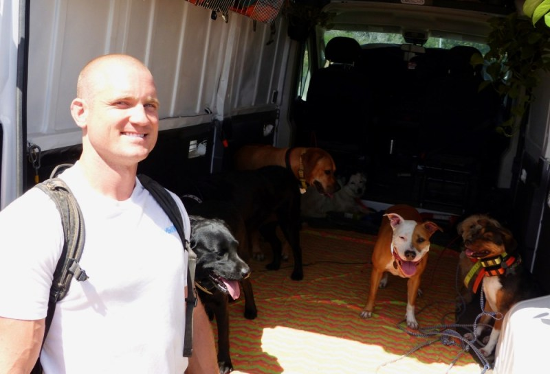 heatstroke in dogs photo 2