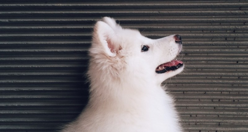 dog chews beg