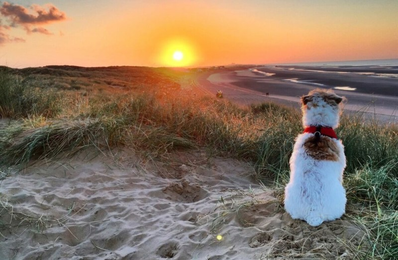 camber sands 6
