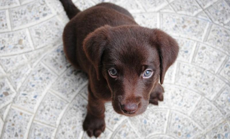 dog food buying puppy