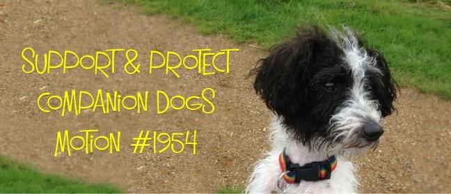 companion dogs cover