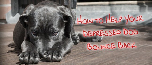 depressed dog cover