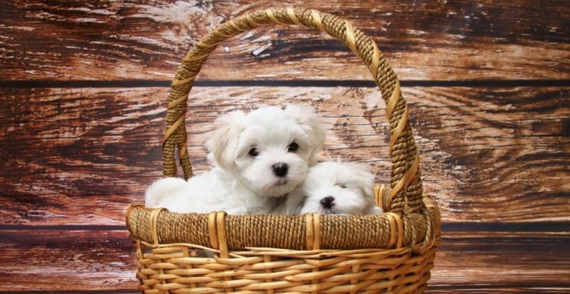 truly dog-friendly gift basket