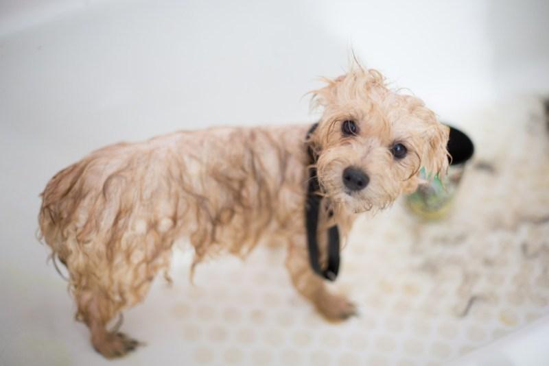 adorable-animal-bathed-1436139