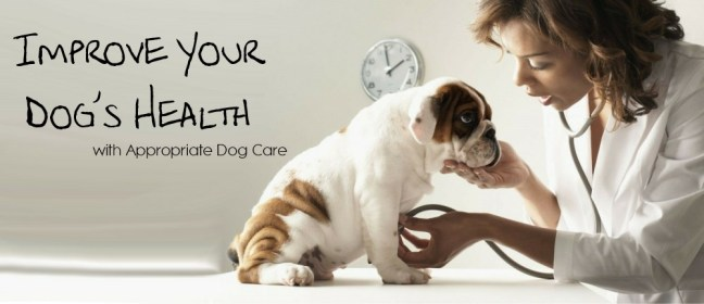 dog health cover