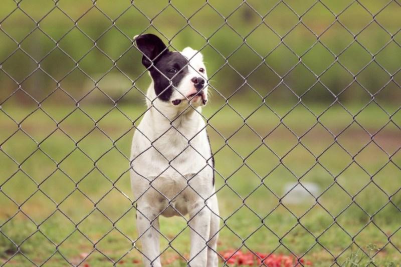 dog-friendly garden fences
