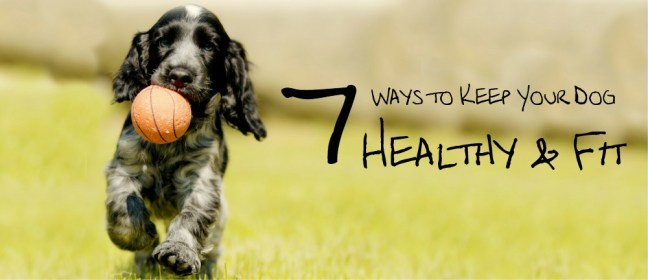 dog healthy cover