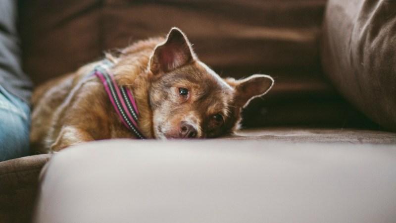 little dog bed sofa