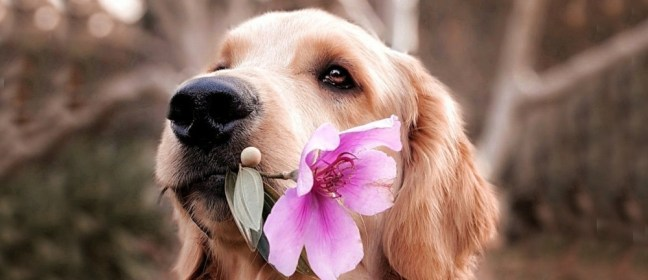 emotional support dog cover