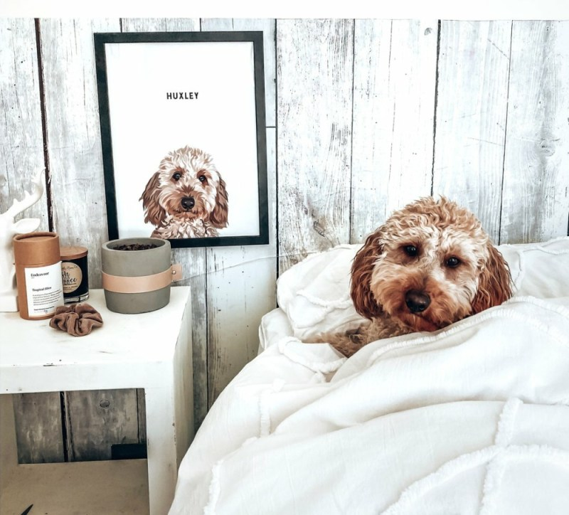 dog and portrait