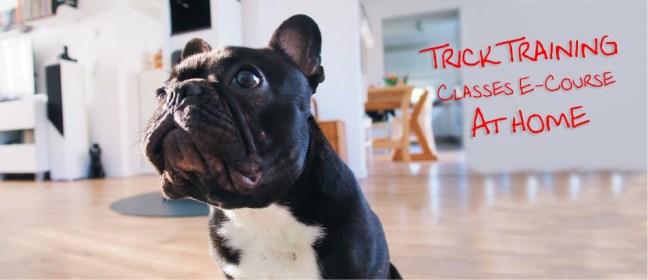 dog trick training cover