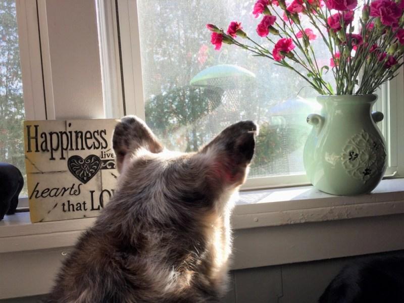 Senior Dog Antics window at the neighbor