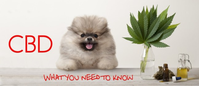 cbd need to know cover