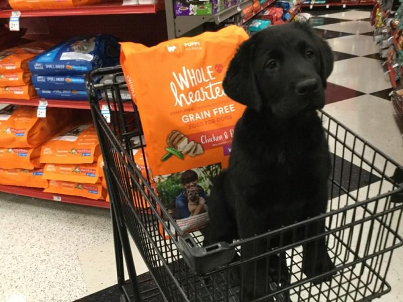 dog in cart
