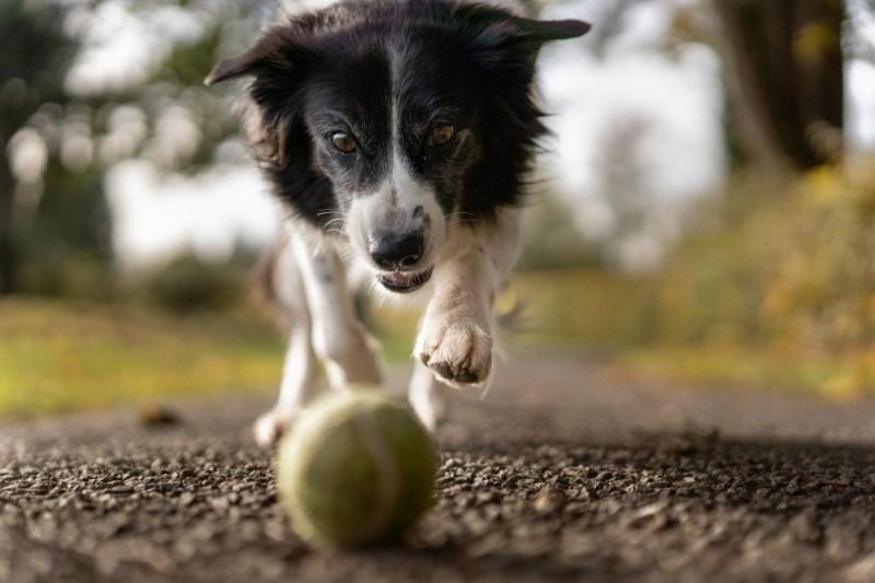 playtime ball and dog