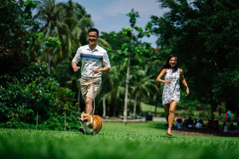 playtime with dog and family