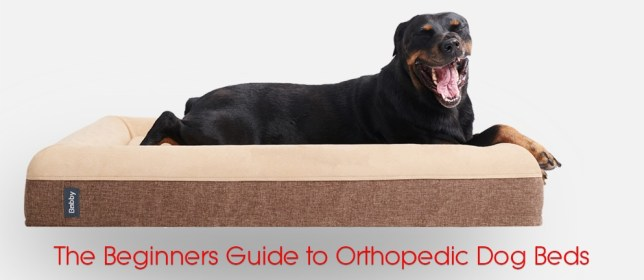 The Beginners Guide to Orthopedic Dog Beds cover