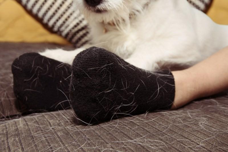 pet hair on socks