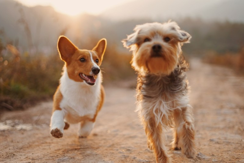 pet insurance policy dogs running