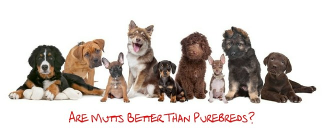 mutts vs purbreds covers
