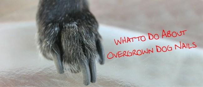 overgrown dog nails cover