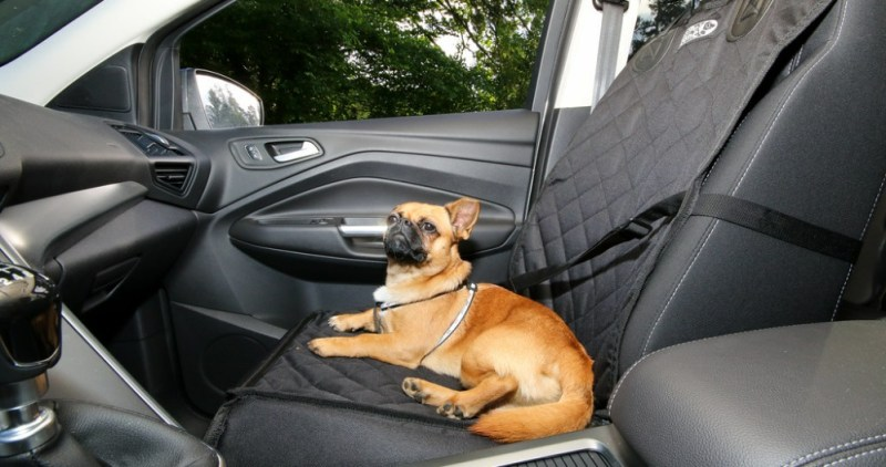 Accessories for puppy car seat