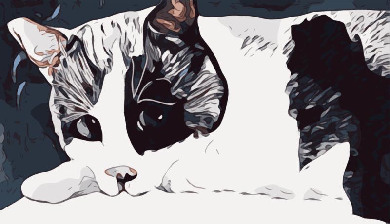 Custom Pet Art cat