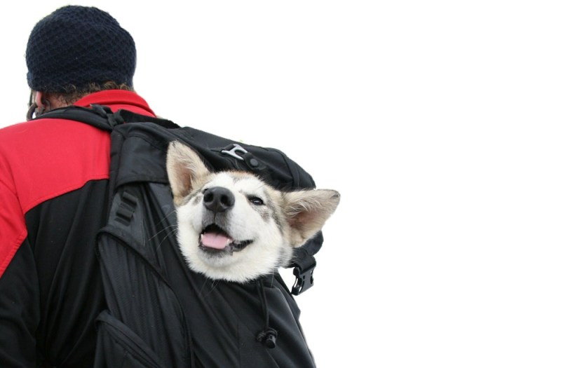 puppy travel backpack