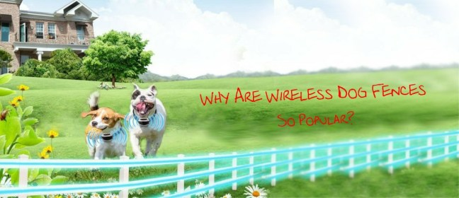 wireless fences cover