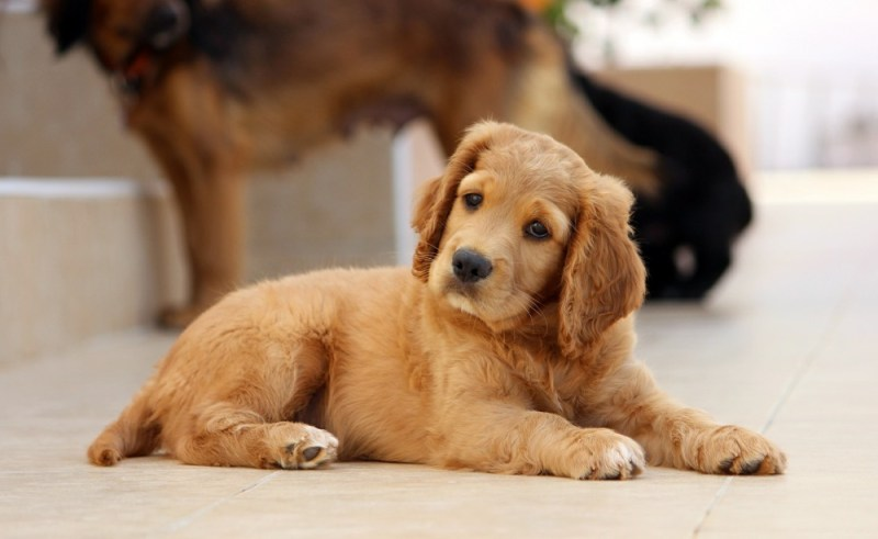 hip supplements for dogs