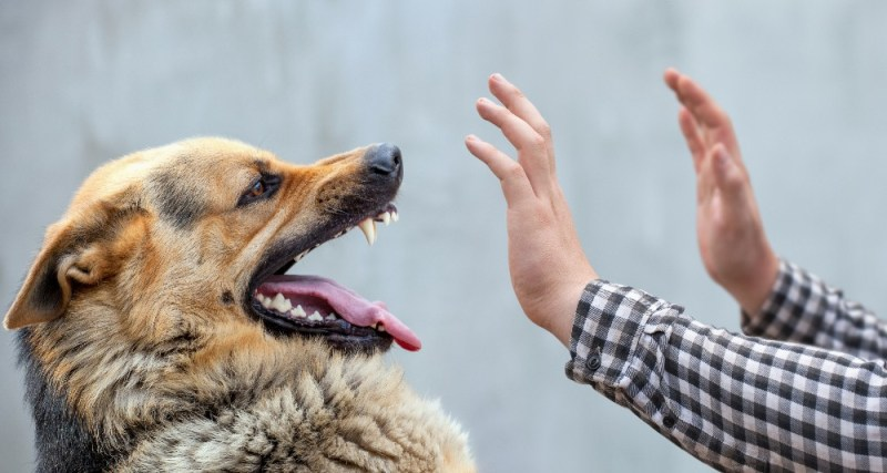 dog injures or bites you