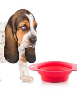 Comedouro Dobrável para Animais de Estimação Heart