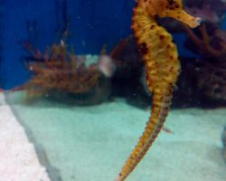Project Seahorse releases iSeahorse project