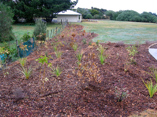 Were the recently planted shrubs the wrong type or were they planted at the wrong time?
