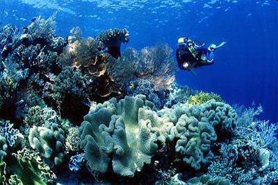 Mawadah Dive Center In Wangi Wangi Island Southeast Sulawesi Province