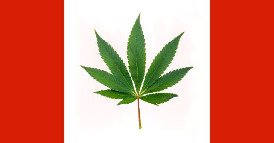 Canada Is Legalising This Week.. Will The Country Run Out of Weed