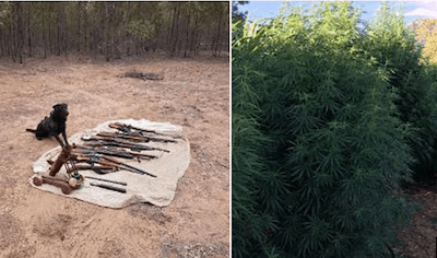 Australia: Qld Police Seize Homemade Cannon In Weed Bust !