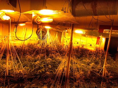 And Another Grow House Busted In The UK Because Neighbours Got A Whiff Of The Skunky Smell