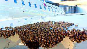 Bees To Replace Sniffer Dogs Says UK Media Report