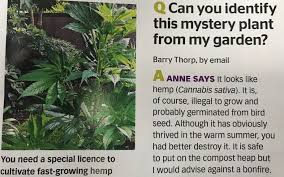 Bird seed can cause cannabis plants to grow in your garden, BBC Gardener's World expert warns readers