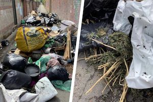 UK: Wales – Remains of large-scale 'cannabis plantation' dumped in lane behind houses