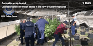 Australia: Three men charged over massive cannabis bust at Brayton
